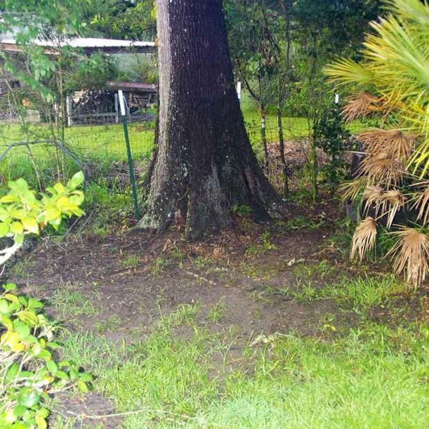 Grass under a tree